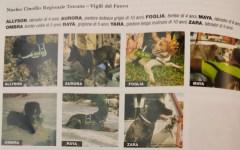 Ponte di Genova: i cani dei vigili del fuoco della Toscana premiati a Camogli. Eroi del soccorso