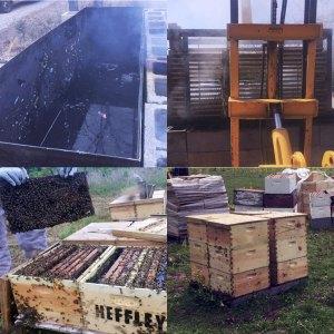 Premium apiary wax