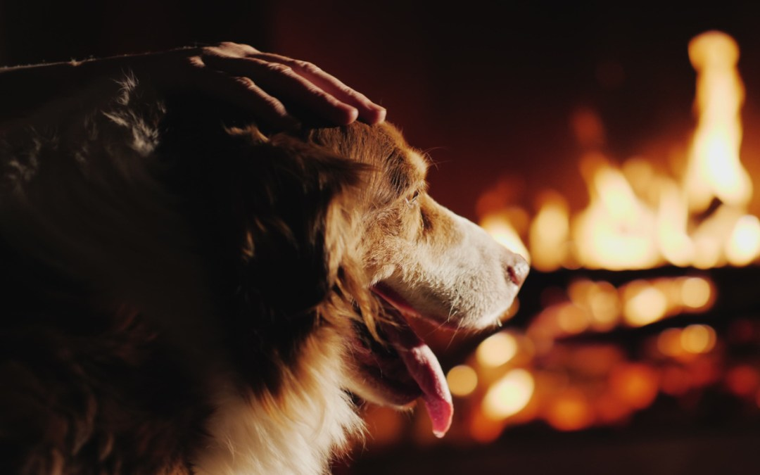 Dog Causes Fire In UK House By Starting the Microwave