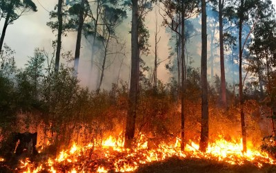 Tips for Homeowners on Wildfire Safety