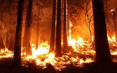 Mountaintop cameras could detect wildfires earlier
