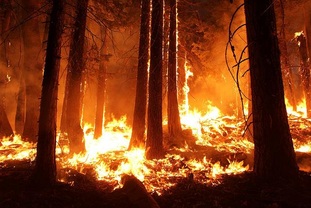 What's it like to investigate a wildfire?
