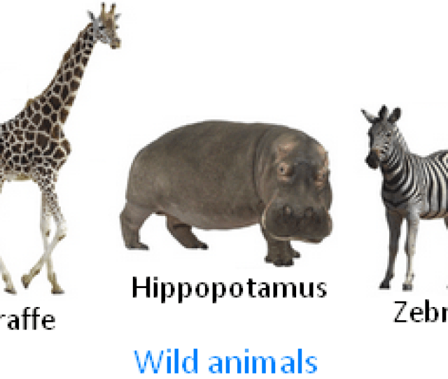 Wild Animals Picture