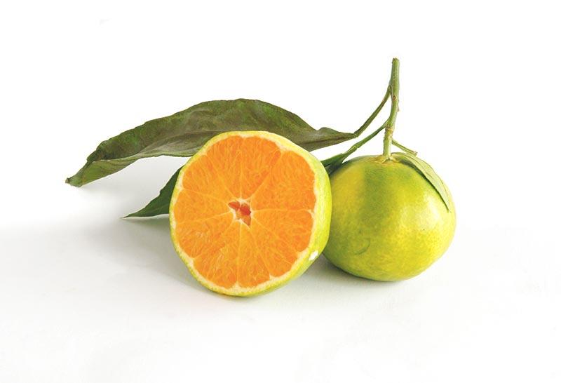 Bitter fruits list