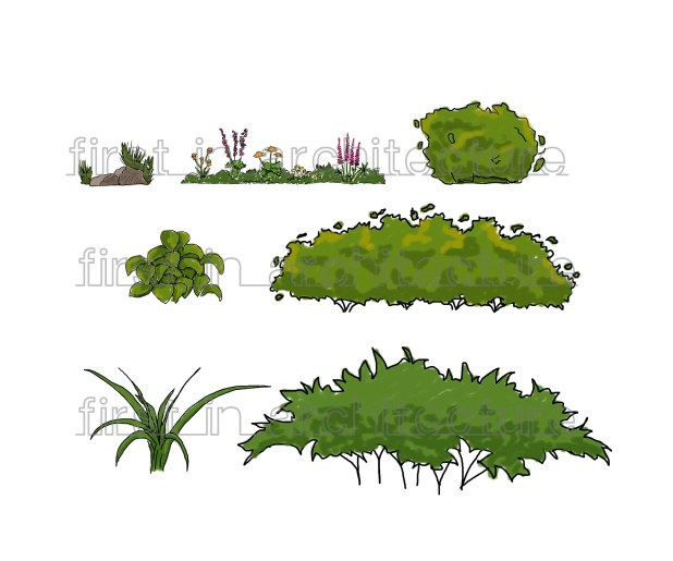 Sketchy plants and shrubs