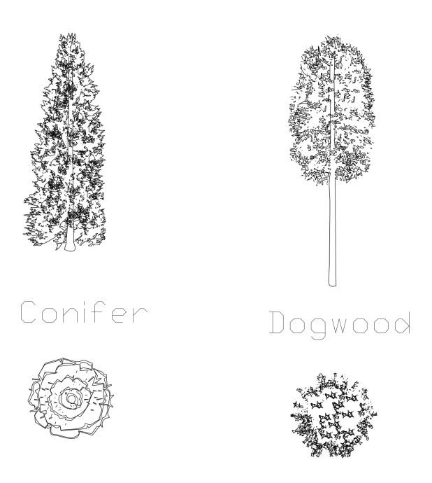 Conifer and Dogwood