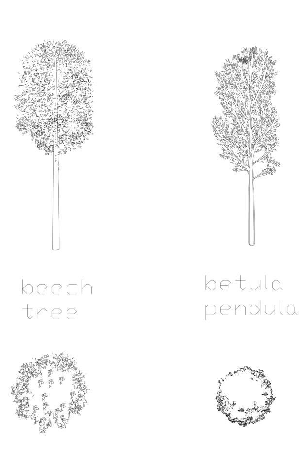 Beech and Betula