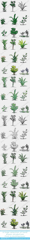 fia-bushes_plants-complete-2-1