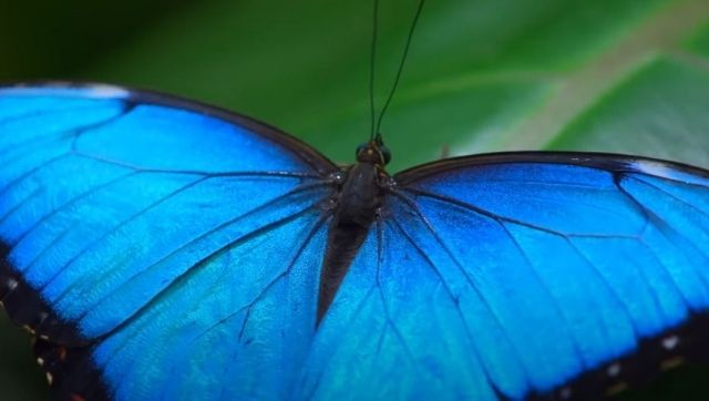 World Earth Day With new technology Netflix docuseries Life in Colour makes wildlife research accessible