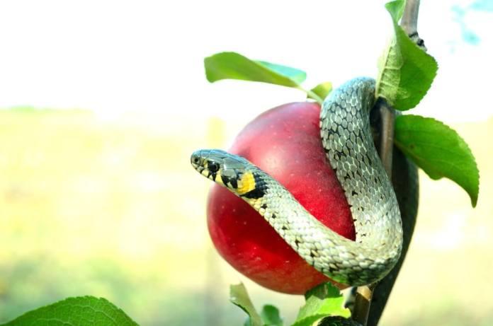 Il contributo a fondo perduto e i frutti dell'albero avvelenato