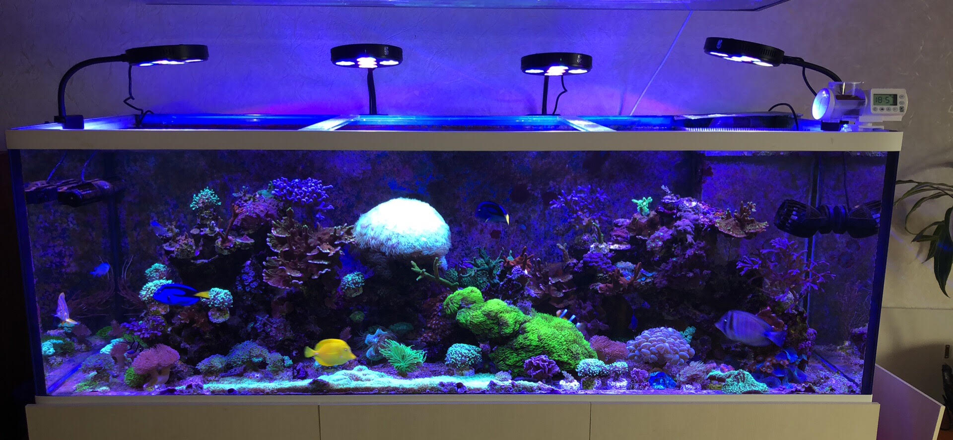 Coral Box Moon Led Plus Lighting