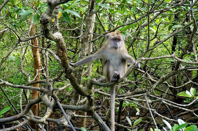 兰卡威红树林游