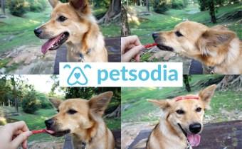 Petsodia | 暂别毛小孩,让你放心去旅行的宠物民宿