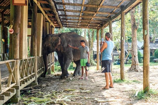 老挝大象营