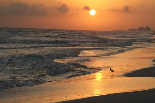 Tampa Bay Area Beaches
