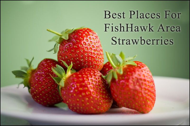 Best Places For FishHawk Area Strawberries