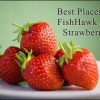 FishHawk Area Strawberries