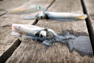 The Ultimate Guide to Jigging for Kokanee • Fishing Duo