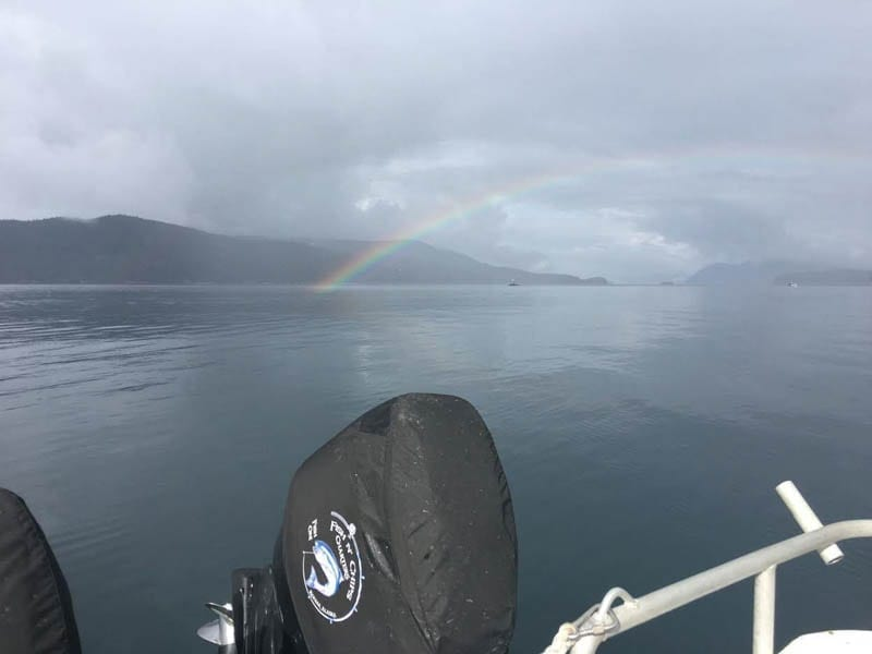 Kodiak's Emerald Island rainbow viewed on Fish N' Chips Charters -Alaska Charter Fishing