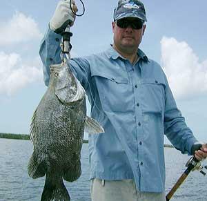 TripleTail from Nov 1st Fishing Charter