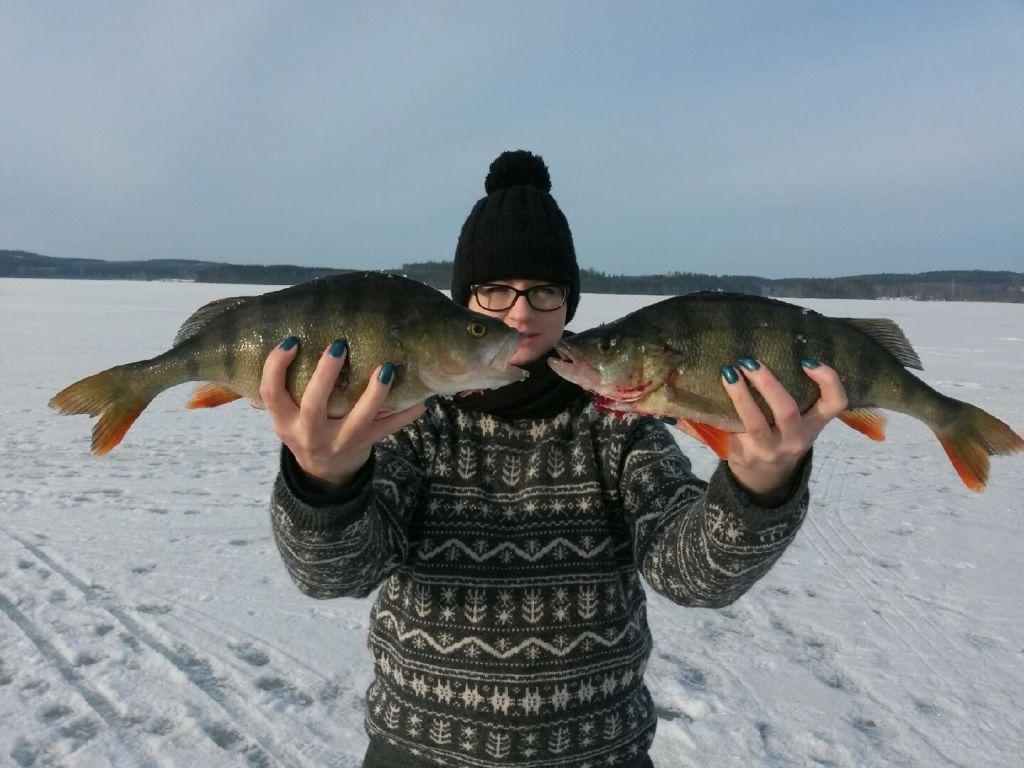 kalastus kalastusblogi ahven
