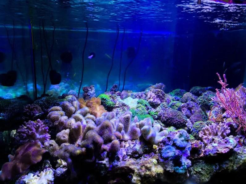 Assistenza e manutenzione acquario Roma