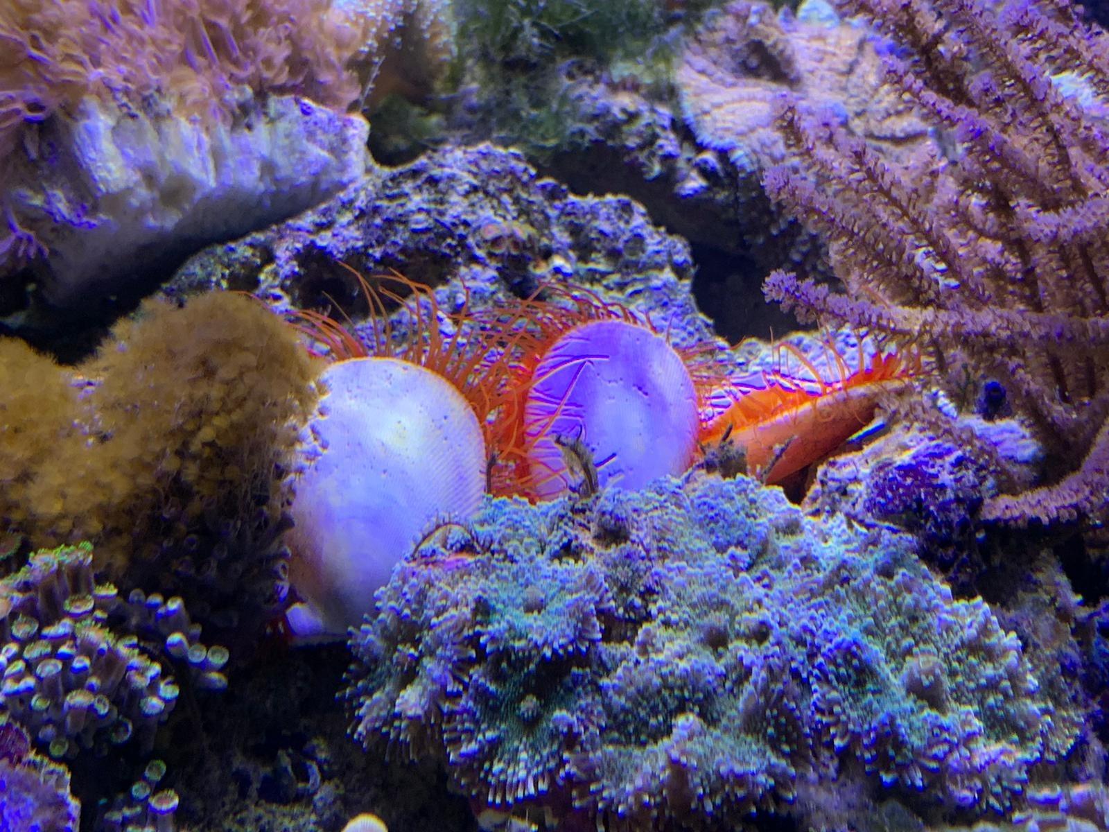 invertebrati marini
