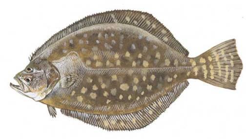 Flounder Fishing Galveston