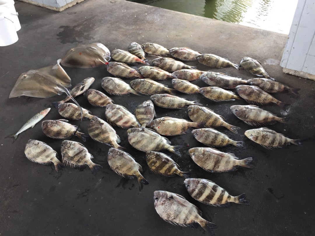 Galveston inshore fishing charters