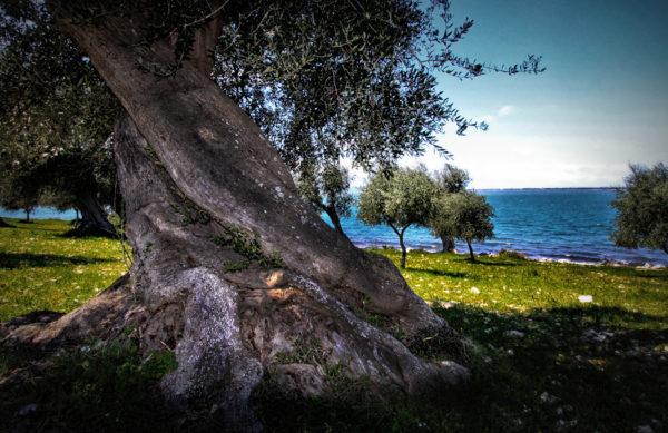 L'energia sottile è il linguaggio naturale degli alberi. Quando le nostre capacità comunicative si evolvono, aumentano le possibilità di comprendere il loro linguaggio e questo ci permette di iniziare ad avere relazioni nuove con loro. Essi possono aiutarci ad aprire i nostri canali energetici e a coltivare la serenità, la calma, l'energia, la gioia, la presenza e la vitalità, di cui necessitiamo.