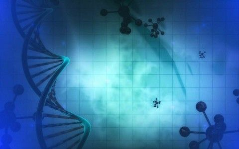 modificaciones geneticas y fisiomuro06