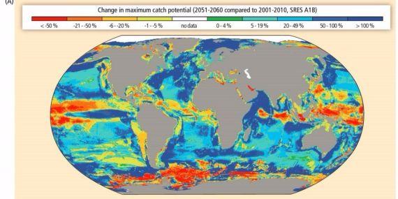 destruccion de los oceanos y fisiomuro08