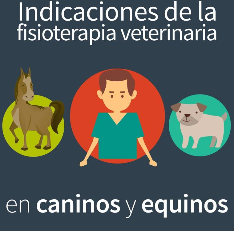 veterinario760