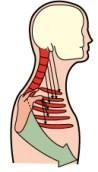 respirazione canottaggio fisioterapia