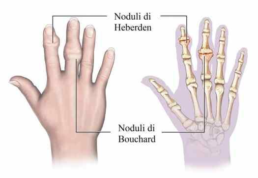 Risultati immagini per dita della mano