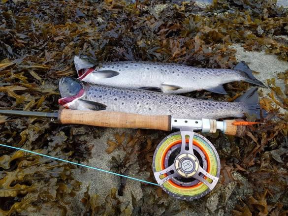 Jakten på ny pers i Oplø elva