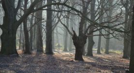 Nordic walking in Epping Forest