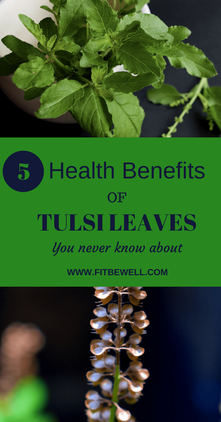 Tulsi - 5 major health benefits