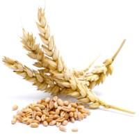 Gluten: ¿Bueno o malo? Una intolerancia que esconde secretos