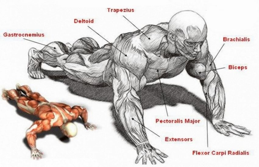 bigger-arms-with-pushups