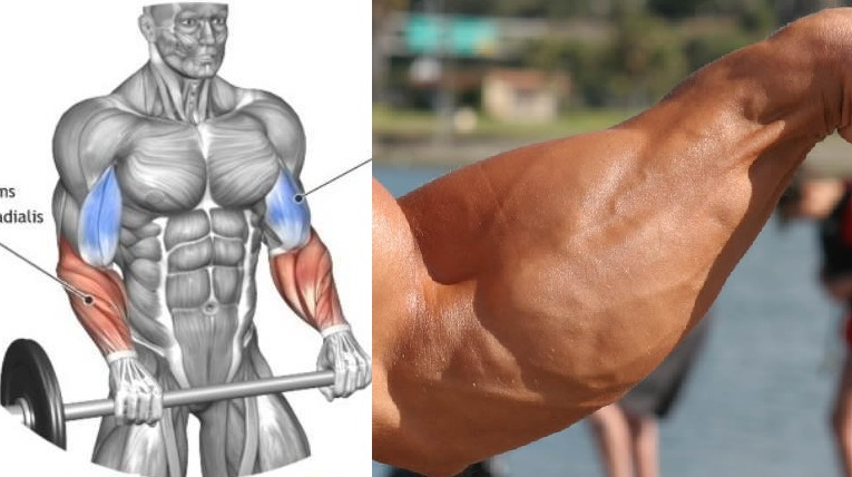 The four finest workouts for enormous forearms