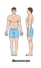 Mesomorph نوع الجسم