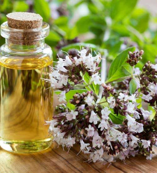 Oregano Essential Oil to remove Tooth Abscess