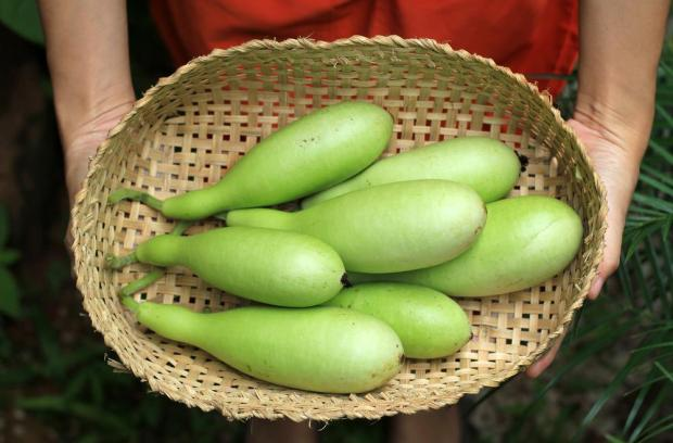 Calories in Bottle Gourd