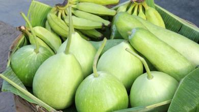 Photo of Know Your Food – Bottle Gourd or Lauki and its Wonders