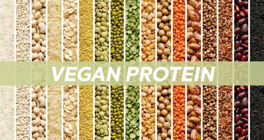 Vegan protein feature image