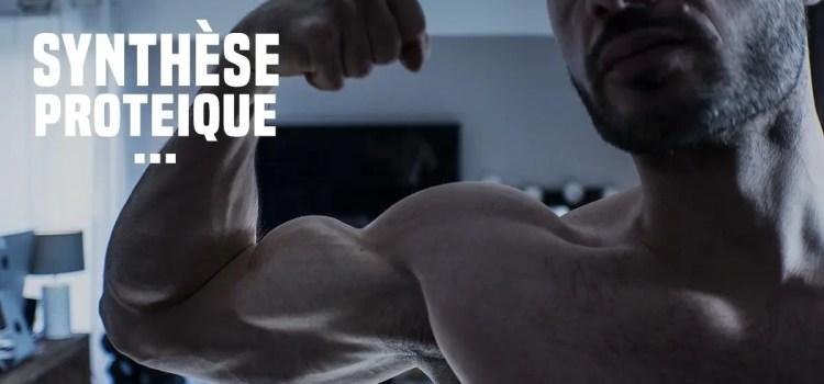 🔒 La synthèse protéique en musculation