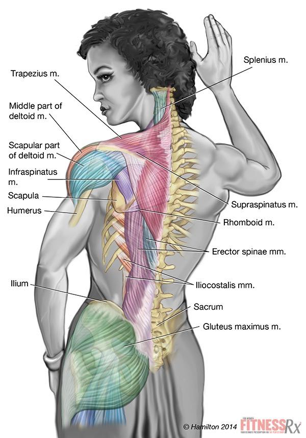 Remodeling Your Back Hyperextensions with Dumbbell Lateral Raises