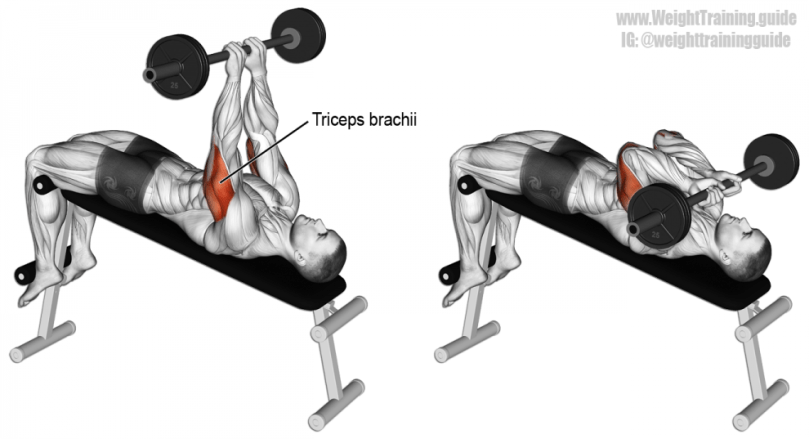 barbell extensions - triceps bodybuilding