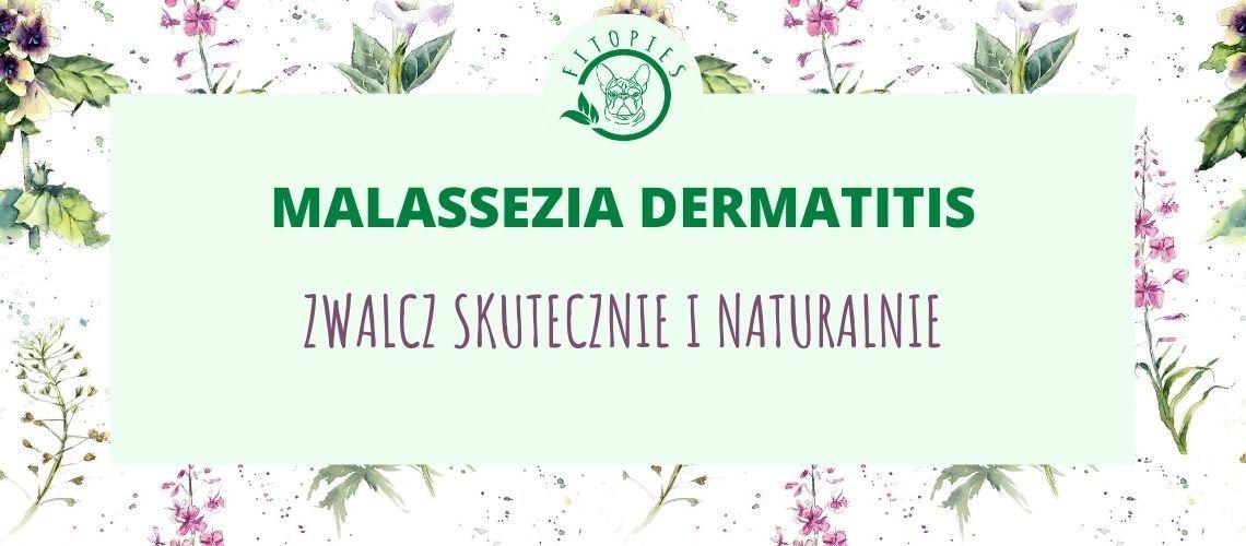 malassezia dermatitis